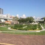 中之島公園バラ園