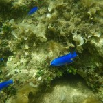 石垣島の魚