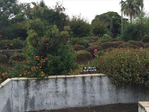 伊豆のあじさい苑の花