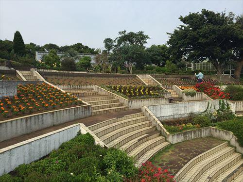伊豆のあじさい苑の花たち