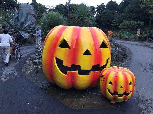 伊豆シャボテン公園のハロウィンかぼちゃ