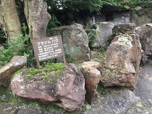 伊豆シャボテン公園のバク