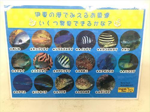 遊覧船ゆーみんフック号から見える魚たち
