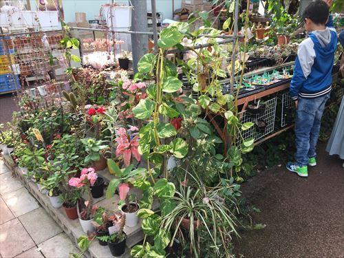 西島園芸団地の植物