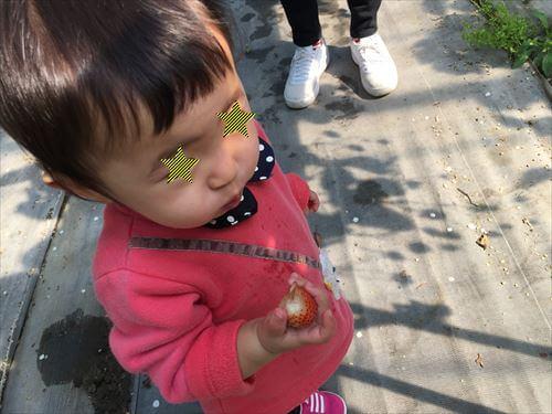 イチゴをほおばる子供ちゃん
