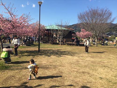 河津桜まつりの広場