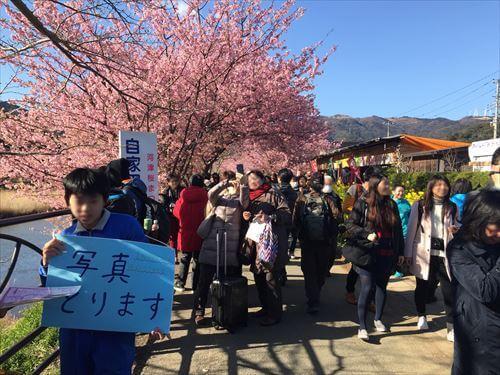 河津桜まつりで写真を撮ってくれる中学生