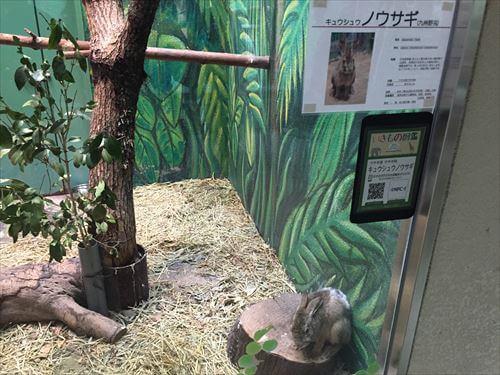 九州ノウサギ