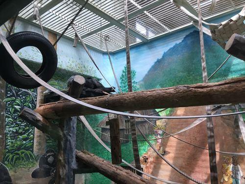 わんぱーくこうちのチンパンジー