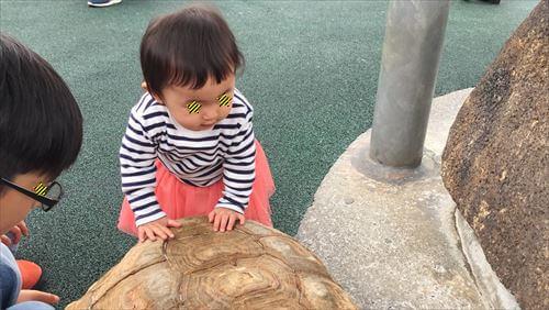 ふれあい広場のリクガメを触る子供ちゃん