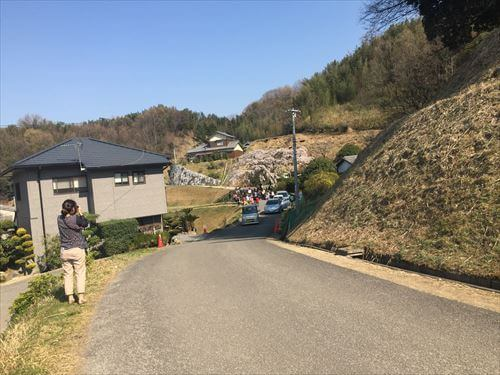 堀池のしだれ桜-撮影