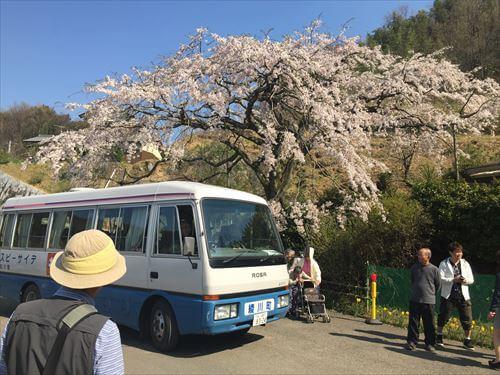 堀池のしだれ桜-デイサービスのバス