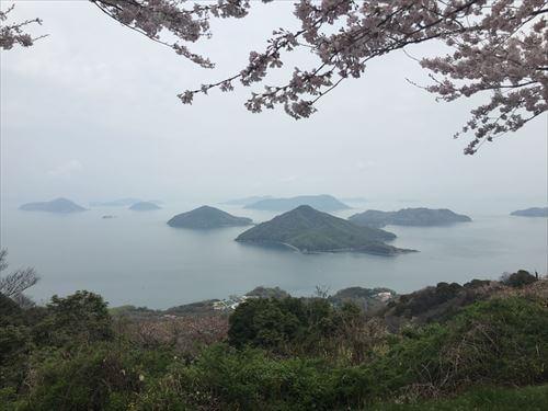 紫雲出山桜まつり-桜と海のコラボ