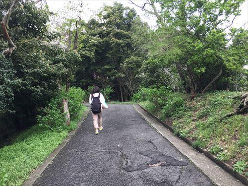 紫紫雲出山桜まつり-登山道