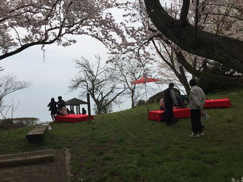 紫紫雲出山桜まつり-お茶席
