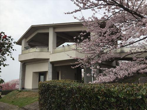 紫雲出山桜まつり-山頂展望台