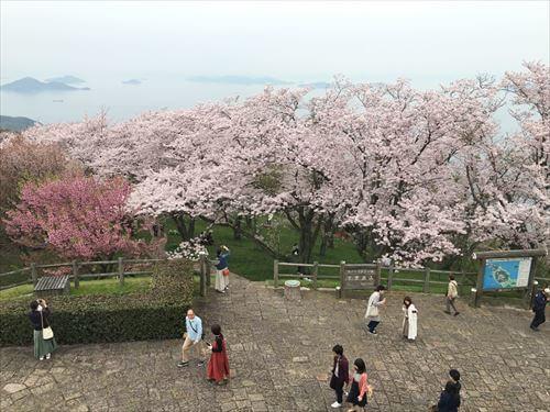 紫雲出山桜まつり-山頂広場
