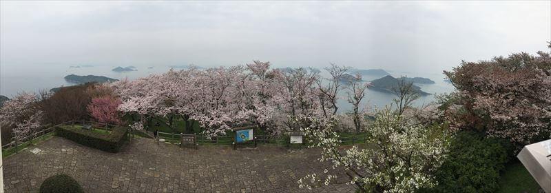 紫雲出山桜まつり-山頂展望台からの風景