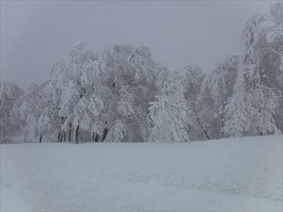 斑尾高原スキー場の樹氷