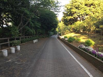 くりはま花の国園内道