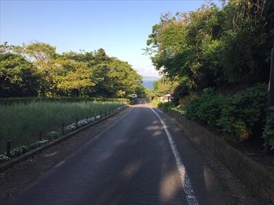 くりはま花の国の道中から見える海