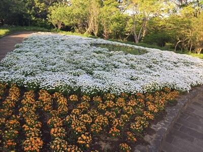 くりはま花の国の道中の花