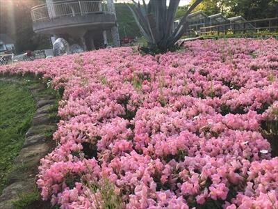 くりはま花の国のハーブ園