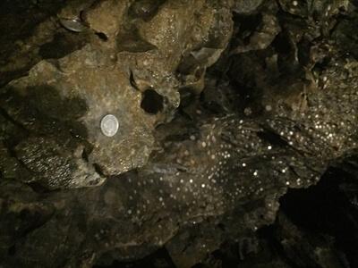 日原鍾乳洞内の十二薬師の上に1円玉がいっぱい