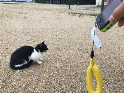 女木島で猫をじゃらす