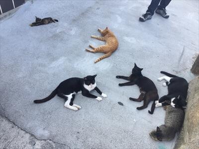 真鍋島の港の猫たち