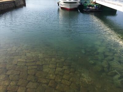 真鍋島の港の海水