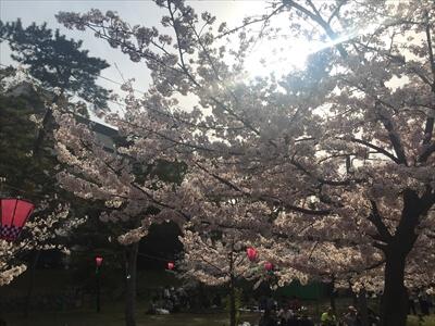 玉藻公園(高松城跡)の桜提灯