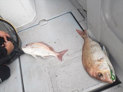 高松の船釣りで釣りあげた鯛
