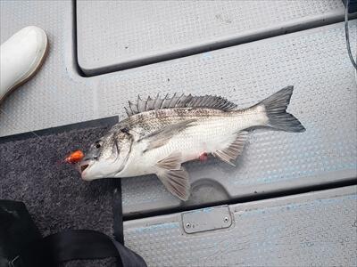 高松の船釣りで釣った魚