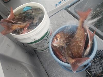 高松の船釣りで釣りあげたバケツいっぱいの魚