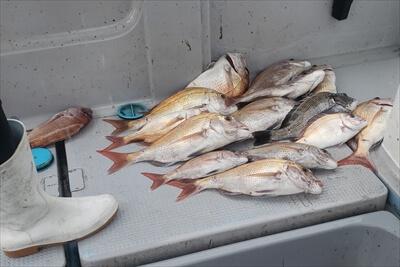 鮒釣りで釣った魚たち