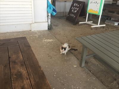 海の家『鬼旬』で忍び寄る猫