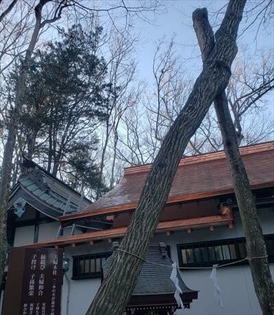新屋山神社の縁結びの社の交わりあう樹木